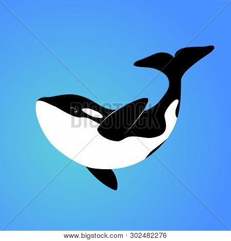 Isolated Orca Whale On Blue Background. Killer Whale. Sea Animal. Colorful Orca Whale In Blue Ocean.