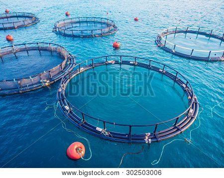 Salmon Fish Farm Aquaculture Blue Water. Aerial Top View.