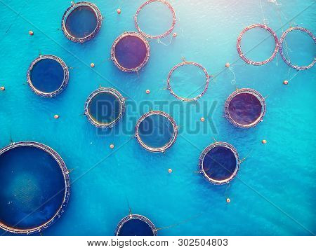 Farm Fish Salmon Aquaculture Blue Water Floating Cages. Aerial Top View.