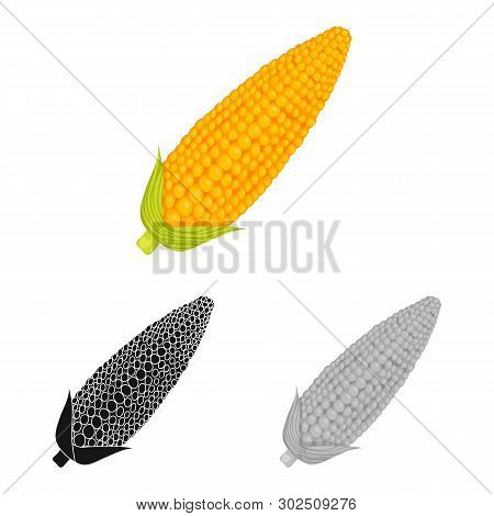 Vector Illustration Of Corn And Sweetcorn Icon. Set Of Corn And Ripe Stock Symbol For Web.