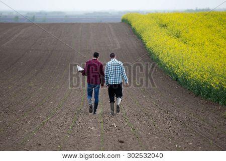 Two Farmers With Laptop Walking Beside Rapeseed Field