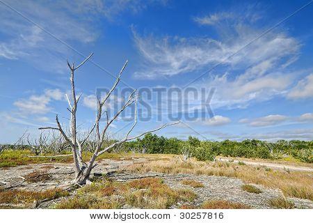 Everglades Coastal Prairies