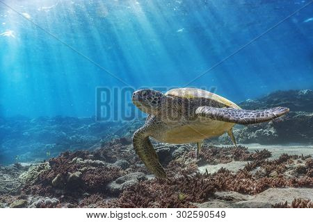 A Beautiful Green Turtle Over The Beautiful Coral Reef