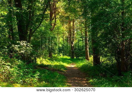 Summer forest landscape in sunny weather - forest trees and narrow path lit by soft sunlight. Forest nature in sunny day, diffusion filter