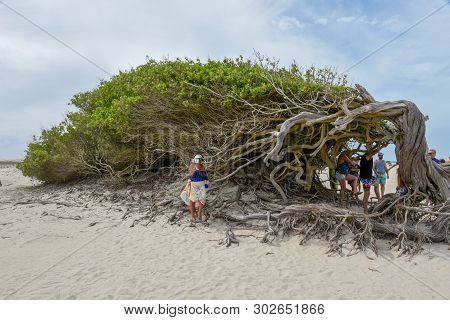 People Visiting The Lying Tree On The Beach Of Jericoacoara On Brazil