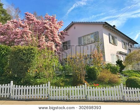 Pink flowering trees and white picket fence around a garden