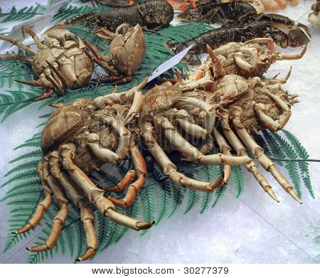 some crustaceans on crushed ice with deco poster