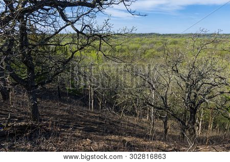 Hillside Overlooking Valley And Budding Forest During Spring At Flandrau State Park Near New Ulm Min