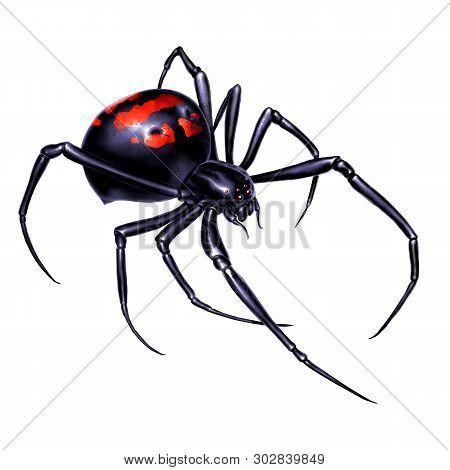 Black Widow Spider On White Background Realistic Illustration Isolate. Black Widow Spider Killer Is