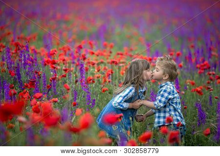Little Curly Blond Boy And Girl Play In Poppy Flower Field. Child Picking Red Poppies. Toddler Kid I
