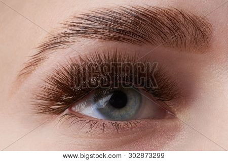 Beautiful Macro Photography Of A Woman's Eye With Extreme Make-up Of Long Eyelashes. Perfect Long Ey