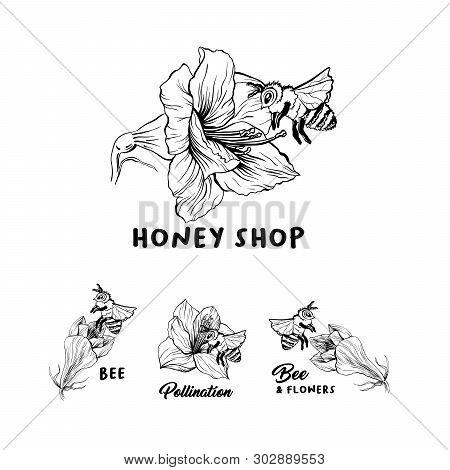 Honey Shop Hand Drawn Logo Vector Illustration Set. Bee And Flowers Ink Lettering. Amaryllis Sketch