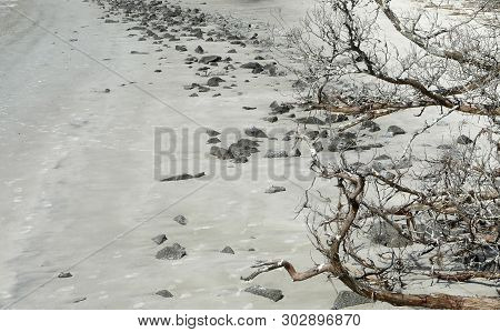 A Dead Tree And Rocks Are Strewn On St. Andrews Beach On The Barrier Island Of Jekyll Island, Georgi