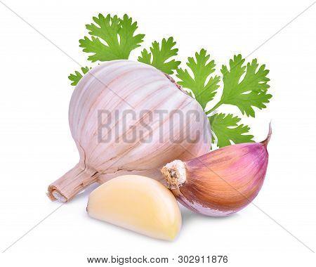 Garlic With Coriandrum Sativum Leaf Isolated On White Background