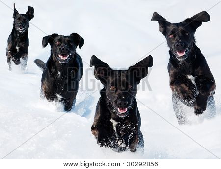 four dogs  In The Snow