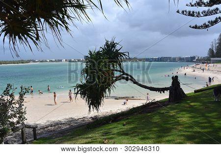 Caloundra, Australia - Apr 21, 2019. Fallen Tree In The Park. People Having Fun At Bulcock Beach.  V