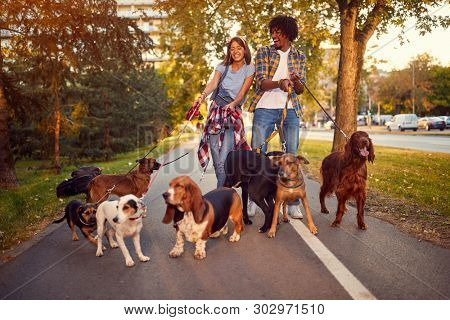 Happy woman and man dog walker with dogs enjoying in walk outdoors.