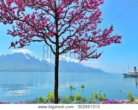 Cherry blossom tree, spring flowers and lake view in Montreux, Switzerland
