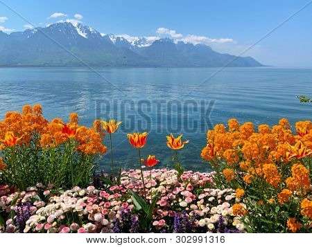 Colourful spring flowers, lake and snow mountain in Montreux, Switzerland
