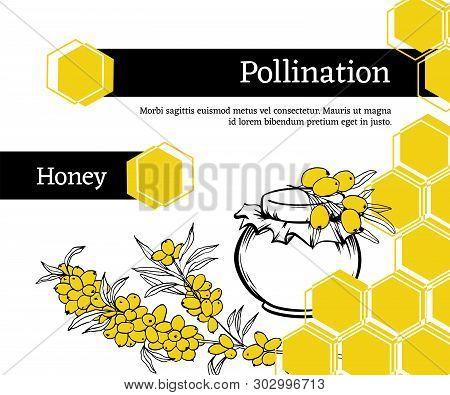 Pollination Hand Drawn Vector Illustration. Sea Buckthorn, Plant Sketch. Honey Shop Packaging Sticke