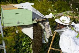 Bees Ii