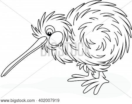 Amusing Flightless New Zealand Kiwi Bird With Shaggy Feathers And A Long Bill, Black And White Outli