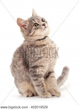Small Gray Kitten On A White Background.
