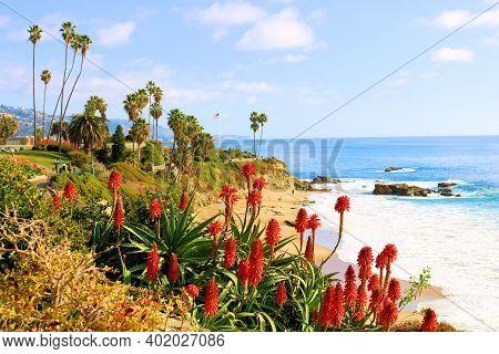 Aloe Vera Plant Flower Blossoms At A Garden Overlooking The Pacific Ocean Taken In Laguna Beach, Ca