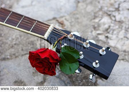 Acoustic Guitar Headstock Decorated By Red Rose Between Strings On The Wall. Beautiful Romantic Back