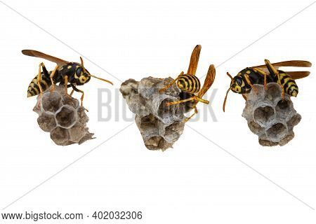 Set Of Wasp Sitting On Top Of Wasp Nest Ilosated On White Background