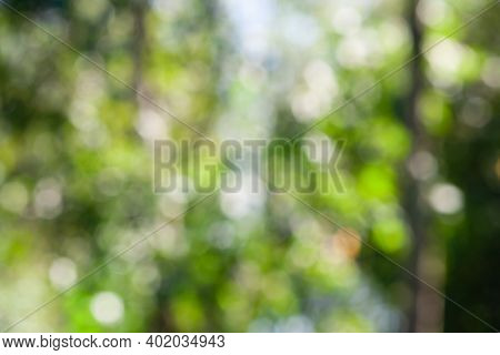 Green Leaf Bokeh Pattern Background For Design. Abstract Blur Green Color For Background,blurred And