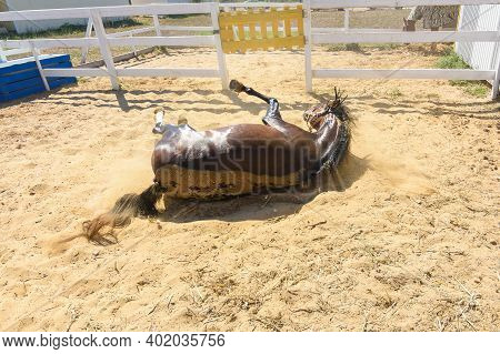 After Bathing, The Horse Fell On Its Back And Is Lying On The Ground