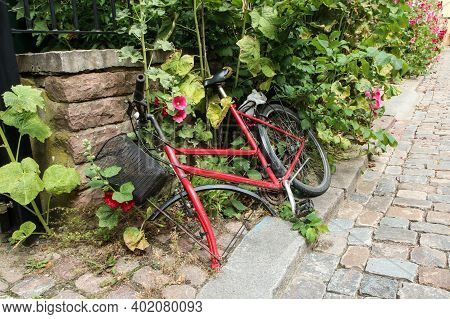 The Red Bike Without A Front Wheel Is Lying On The Street In The Bush And Flowers. The Wheel Was Pro