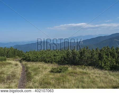 Footpath Of Hiking Trail From Chopok Ridge With Mountain Meadow, Scrub Pine And View Of Blue Green H