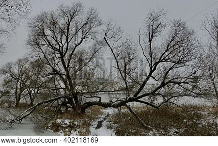 Spreading Ebony Tree On A Frozen Pond, Against The Background Are Visible The Domestic Of An Ancient