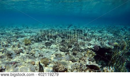 Tropical coral reef. Ecosystem and environment. Red Sea, Egypt. Near Sharm El Sheikh