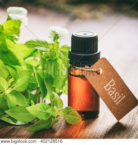 Basil Essential Oil And Fresh Leaves On Wooden Background
