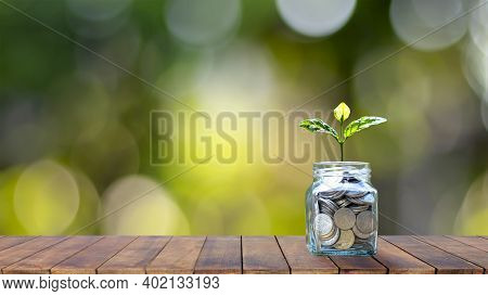 Growing Plant On A Money Bottle On A Wooden Table Top With Bokeh.blurred Green Nature Background.