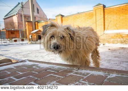 Beautiful White Pooch Dog Near The Booth On A Sunny Day. House For An Animal. Selective Focus