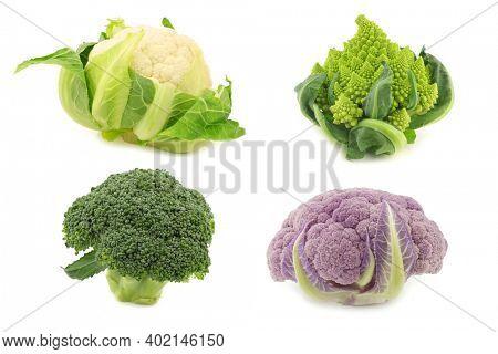 Romanesco broccoli, fresh cauliflower, purple cauliflower and green broccoli on a white background