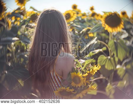 Portrait Of Young Woman Covering One Eye With Sunflower Blossom Is Standing In Field Of Sunflowers,