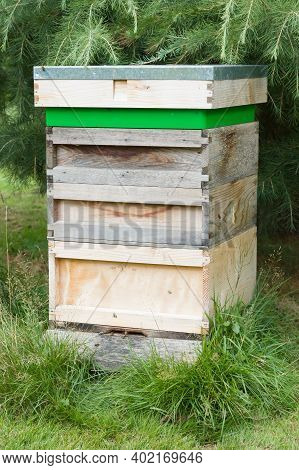 Producing Home Made Honey With A Wooden Beehive (bee Hive) In A Uk Garden