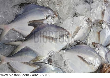 Fresh Silver Pomfret On Ice In The Foods Market,good Seafood Ingredients.