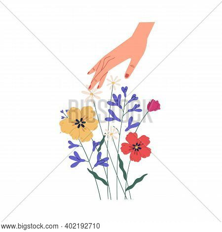 Female Hand Touching Summer Bouquet Of Gorgeous Wild Or Field Flowers. Bunch Of Tender Blooming Anem