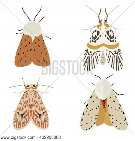 Collection Of Moths In Brown And Beige Shades, Mystical Nocturnal Insects