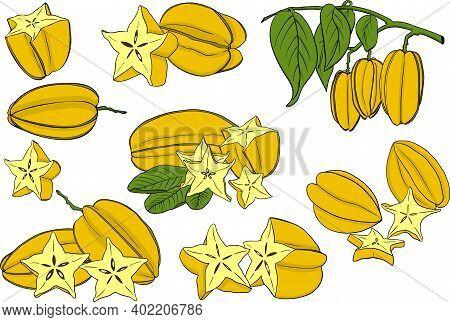Carambola. A Slice Of Carambola. Exotic Tropical Fruit. Vector Hand Drawn. Botanical Illustration. E