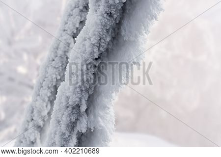 The Branches Of The Tree Are Covered With Snow And Frost Close Up