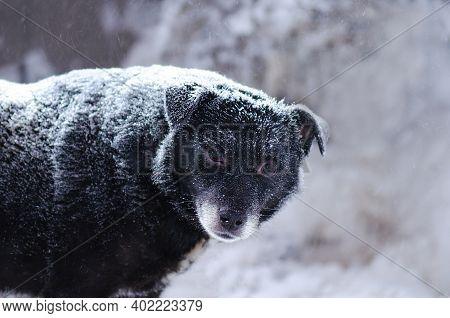 Street Homeless Dog In Winter. Homeless Stray Dog On On Cold Blizzard Street