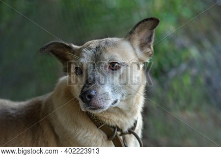 Pretty Cute Dog Is Sitting On Meadow. Concept Healthy And Active Pet Lifestyle. Dog Enjoying Freedom