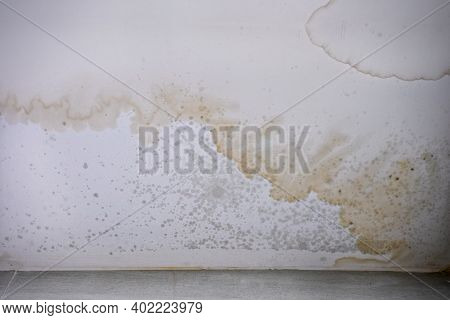Brown Stain Of Indoor Mould And Fungus On The Ceiling.  Effects Of Flooding On The Wall.
